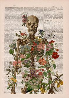 Photo Wall Collage, Collage Art, Images Murales, Human Anatomy Art, Human Skeleton Anatomy, Skeleton Art, Skeleton Flower, Skeleton Head Drawing, Medical Art