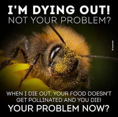 I'm dying out! Not your problem? When I die out, your food doesn't get pollinated and you die! Your problem now?