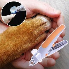 The Safe & Easy Way To Trim Pet's Nails 🐶 Don't Risk Hurting Your Dog's Internal Veins With A Regular Nail Clipper! 🐕 Dog Ramp For Bed, Meds For Dogs, Dog Nail Clippers, Dog Gadgets, Dog Nails, Cool Gadgets To Buy, Argo, Grandmothers, Dog Houses