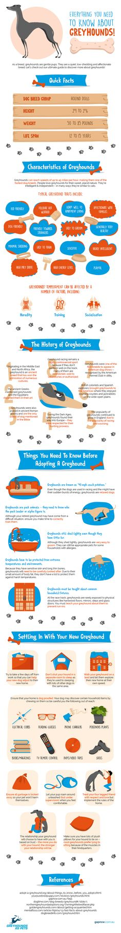 Everything You Need To Know About Greyhounds — The Fifth Paw