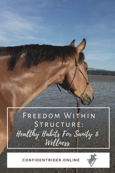 With everything on the outside seeming kind of out of control right now, creating a morning routine is an important part of taking control for yourself and gifting yourself with a sense of certainty when you wake up. >> Confident Rider - mindset, movement and nervous system awareness for equestrians Horseback Riding Lessons, Emotional Resilience, Horse Riding Tips, Training Tips, Nervous System, Healthy Habits, Confident, Equestrian, Mindset