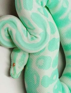 Unique mint green snake