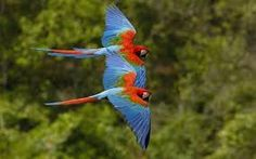 Image result for macaws wallpapers