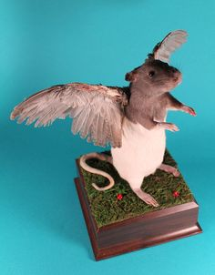 Since seeing Juanita today I have been looking for something similar for myself. Winged Rat Rogue Taxidermy $275