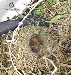 Duas semanas depois, os ovos que estavam nos nossos canteiros já têm vida. :) | Two weeks later, the eggs that were in our beds already have life.