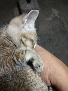 I fed a stray cat in my hostel and lifted her up. She slept on my hand after eating.