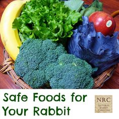 Safe Foods for Your Rabbit - Natural Rabbit Care
