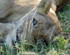 Safari Krüger Nationalpark Safari, Animals, Tour Operator, Nature Reserve, Wilderness, Art Gallery, Elephants, Tours, Animales