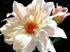 See the Art of Brian Davis At Visions Fine Art Gallery, Sedona Arizona. Art Floral, Botanical Art, Botanical Illustration, Watercolor Flowers, Watercolor Paintings, Floral Paintings, Watercolours, Oil Paintings, Brian Davis