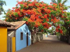 Formosa Casa: Trancoso, Vida Calma E Tranllquila! Places Around The World, Around The Worlds, Places To Travel, Places To Visit, Visit Brazil, Brazil Travel, Flowering Trees, Countryside, The Good Place