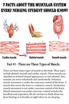 7 Facts About the Muscular System Every Nursing Student Should Know. The muscular system provides the body with mobility. This article has 7 Facts About the Muscular System Every Nursing Student Should Know. Nursing Tips, Nursing Programs, Ob Nursing, Rn Programs, College Nursing, Nursing School Notes, Nursing Schools, Nursing School Graduation, Graduate School