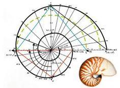 Resultado de imagen para nautilus