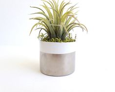 Air plant gifts desk planter faux air plant small faux