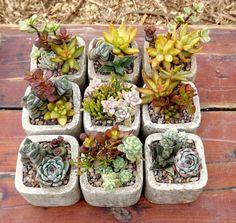 51883355f9c1dc2e11b8876010d01a98 Layout Design For Small Flower Cutting Garden on ideas for small flower gardens, designs for small flower gardens, plans for small flower gardens,