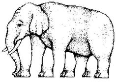 Quick! How many legs does this elephant have? Four, right? Five? Seven?