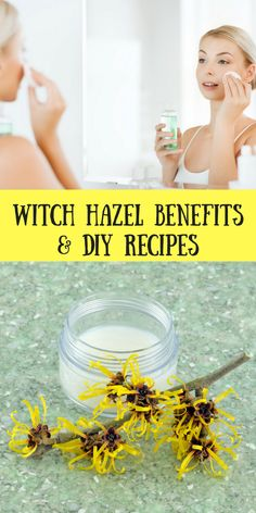 Witch Hazel Uses, Benefits and Recipes