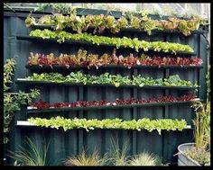 salade - gouttière inclinée - Tight on space?  Try a gutter garden on a fence or wall!