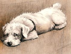 """From The Bunch Book, about a beloved """"Everydog"""" Sealyham terrier, written by James Douglas and illustrated by Cecil Aldin, 1932"""