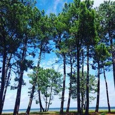 Lac de Biscarrosse www.guide-des-landes.com