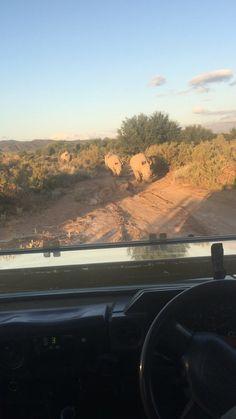 Sanbona Safari