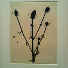 Elsworth Kelly Botanical Drawing. Exhibit at the Met.