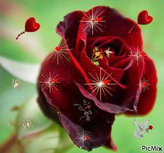picmix gifs | Rose