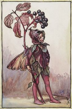 Illustration for the Dogwood Fairy from Flower Fairies of the Autumn. A boy fairy stands facing right holding a branch of dogwood in his right hand.    Author / Illustrator  Cicely Mary Barker
