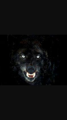 The Alpha's Obsession in 2019   Werewolf books   Werewolf