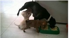 Best fun with animals! Animals, which will bring a smile on your face ANIMAL JOKES A blind man walks into a store with his seeing eye … Dog Pictures, Animal Pictures, Cute Pictures, Random Pictures, Cute Baby Animals, Funny Animals, Funny Character, Dog Eyes, Animal Jokes