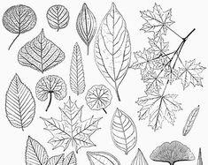 Image result for leaf vein patterns