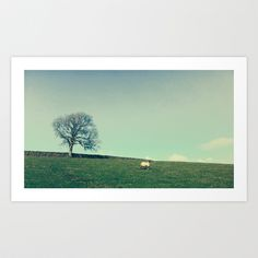 A Sheep and a Tree Art Print by Amber Edmond - $15.00