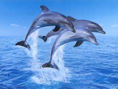 Free 3D Desktop Wallpaper Screensavers | Ventube.com Living 3D Dolphins Animated Desktop Background Wallpapers