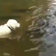 Funny Animal Videos, Cute Funny Animals, Cute Baby Animals, Funny Dogs, Animals And Pets, Cute Dogs, Funny Fishing Memes, Fishing Humor, Funny Memes