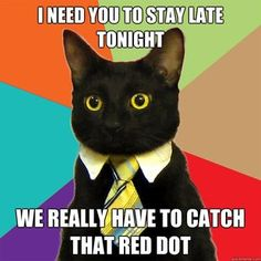 Business cat needs you to work late.