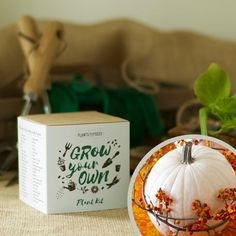 Snowman White Pumpkin Plant Growing Kit - Grow Your Own - Pots, Pellets, Markers, Pot Trays & Seeds - With DIY Instructions by Plants From Seed on Gourmly Pumpkin Snowmen, Giant Pumpkin, Snowman, Planting Pumpkins, Fly Traps, Plant Markers, Carnivorous Plants, Photosynthesis, Xmas