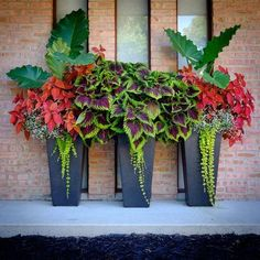 Tapered pots on our front porch. Coleus, elephant ears, creeping jenny. The Best of home decoration in 2017.