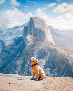 [New] The 10 Best Photography (with Pictures) - Mans Best Friend! Always awesome to know someones got your back! Tag your adventure partner! Lab Puppies, Cute Puppies, Cute Dogs, Outdoor Pics, Destinations, Camping Car, Yosemite National Park, Four Legged, All Dogs