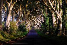 魔女が住んでるとしか思えない…幻想的な北アイルランドの並木道「ザ・ダークヘッジ」:らばQ