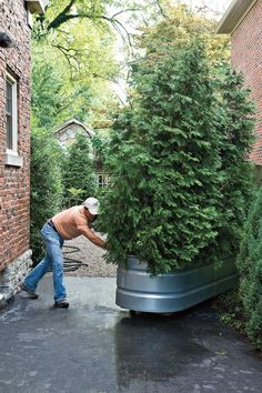 Clever!! Get creative with your containers. This living gate rolls open to let you in and rolls closed for privacy. The structure starts with a galvanized horse trough filled with soil and planted with arborvitaes. A wooden brace attached to an old piano dolly on the bottom allows the container to move with little effort.  Tour this Budget Backyard