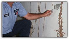 Signs of a Termite Invasion