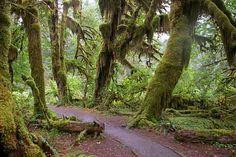 Hoh Rainforest, Washington #cheapflights2013
