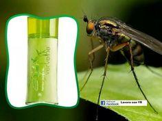 Questa acqua alla verbena aiuta a tenere lontane le zanzarine!!!