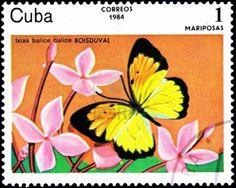Ixias Balice with a Butterfly, circa 1984, Cuba