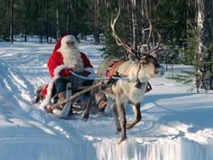 Santa Claus in his sleigh with a reindeer on snow Think I'm gonna make a card out of this!  Beautiful