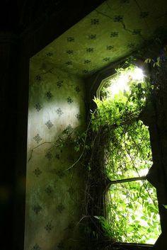 Beautiful window overgrown