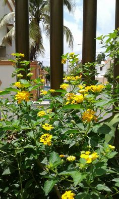 #Bellezanatural #Floresdemijardin