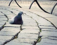 Olomoucké náměstí Penguins, Animals, Pictures, Animales, Animaux, Penguin, Animal, Animais