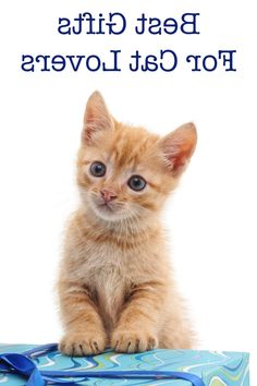 Gifts For Cat lovers Fun Facts About Cats, Cat Facts, Cat Lover Gifts, Cat Lovers, Cat Beard, Cat Site, Cat Grass, Tiny Cats, F2 Savannah Cat
