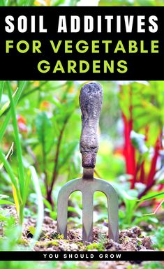 Backyard vegetable garden: what should you add to your garden soil for your vegetable garden? Gardening For Beginners | Homesteading | Gardening Tips