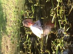"""The pond monster putting a pump in a natural pond that is """"living the pond life """" Natural Pond, Pond Life, Pump, Garden, Nature, Naturaleza, Lawn And Garden, Pump Shoes, Gardens"""